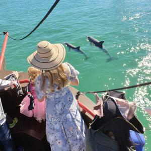 Dolphin spotting on the pirate ship